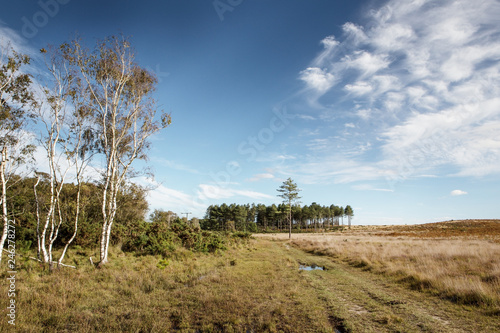 Stoborough Heath landscape image