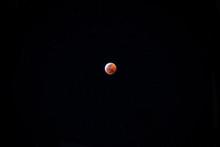 Wolf Super Blood Moon