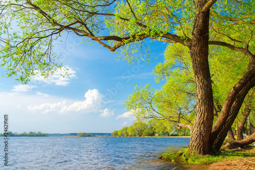 Foto op Canvas Bomen Tree on lakeside in springtime