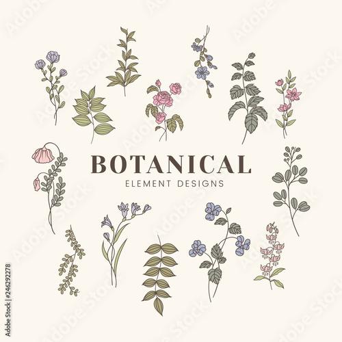 Botanical floral mockup illustration Wall mural