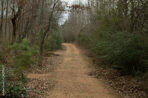 dirt path in the forest