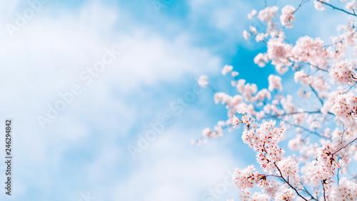 Stickers pour portes Fleur de cerisier 桜