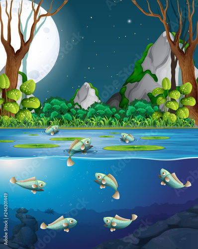 Fish in river at night scene