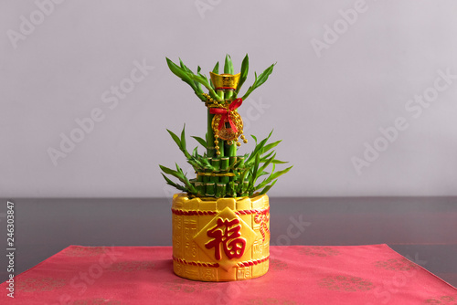 Photo  Decorative water bamboo plants for feng shui ornamental decoration with golden v