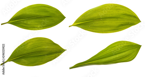 Poster Muguet de mai set green leaf lily of the valley flower. Isolated on white background