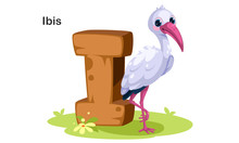 I For Ibis