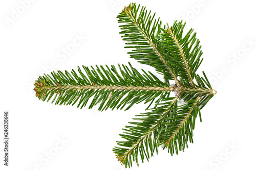 Photo Branch top of silver fir (Abies alba) isolated on white.