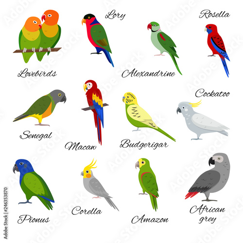 Fényképezés Colorful set of parrot icons