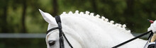 Horse Dressage White In The Fo...