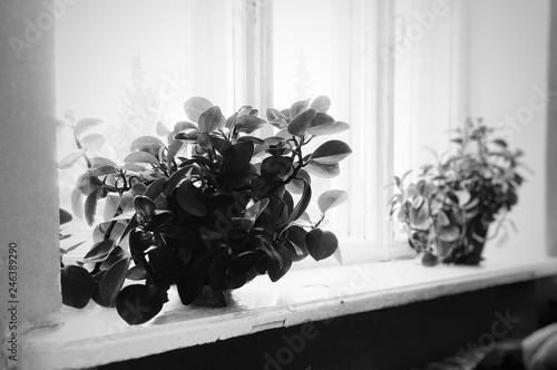Fototapety, obrazy: flowers in a vase