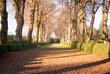 Camino recto de hojas secas entre dos filas de árboles y setos en un jardín de un palacio medieval en un día soleado en inveirno en Galicia, España