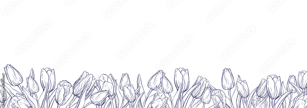 Fototapety, obrazy: Flat horizontal banner template with outline tulips on white background