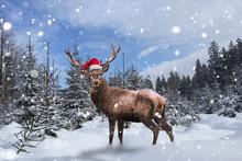 Stolzes Rentier Steht Mit Nikolausmütze Im Schnee