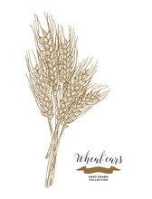 Wheat Ears. Rustic Bouquet Design. Hand Drawn Vector Illustration.