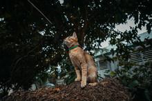 Red Cat Hunts In The Garden