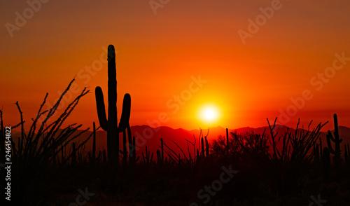Montage in der Fensternische Rotglühen Saguaro Sunset