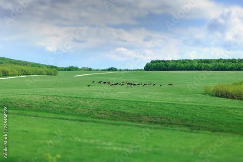 Fotografía  a herd of cows on a green field