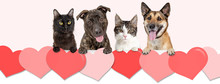 Dogs And Cats Over Valentines Day Hearts Web Banner
