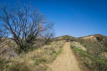 Brush Alongside California Hiking Trail