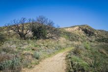 Offroad Trail In Desert Hills