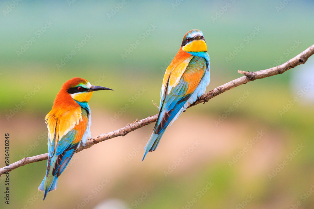 beautiful colorful birds sitting on a branch