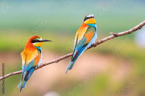 Fotobehang Vogel beautiful colorful birds sitting on a branch