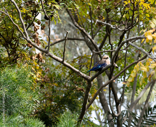 Fotografie, Obraz  Cute Little Blue Colored Bird in Tree