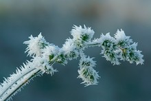 Ice Crystals On Grass, Hesse, Germany, Europe