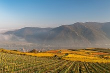 Autumnal Vineyards, Weissenkirchen In The Wachau, Danube, Wachau, Waldviertel, Lower Austria, Austria, Europe
