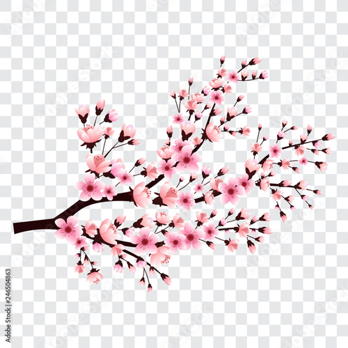Sakura Branch With Blooming Flowers Cherry Blossom Tree Vector Illustration Buy This Stock Vector And Explore Similar Vectors At Adobe Stock Adobe Stock