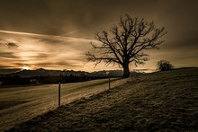 Leafless Tree In Front Of A Dr...