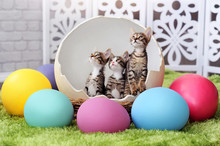 Three Kittens Sitting In The Easter Egg Shell