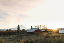 View Of Mount Hood And Barn At...