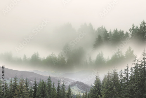 Blanc Picturesque view of mountain forest in foggy morning