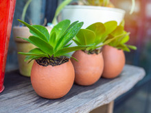 Green Plants In Three Eggshells On Wooden Table