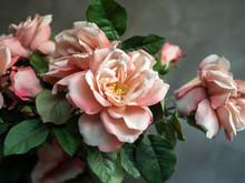 Beautiful Vintage Pink Roses F...