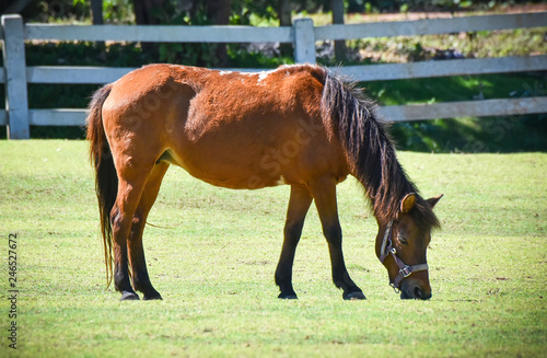 Brown horse grazing green grass on bright day with fence stable horse in field countryside