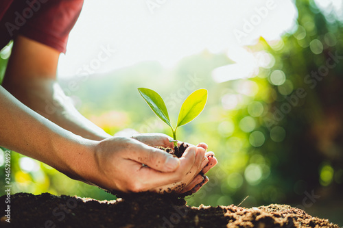 Canvas Print Fresh Green Plant Growing,Tree Growth Steps In nature And beautiful morning ligh