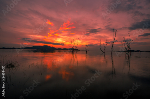 Fototapety, obrazy: The background of the twilight light in the evening on the lake, with a perennial tree on the water, is a natural beauty.