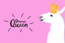 Alpaca In A Golden Crown. Fun Quote Drama Queen. Print For Card, Poster, T-shirt