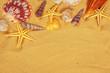 Seashells on sand. Sea summer vacation background