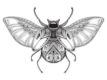 Black And White Hand Drawn Stylized Beetle.