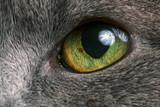 macro photo of grey cat's eye