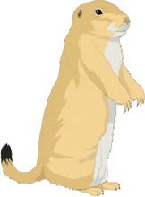 Prairie Dog Standing Vector Illustration