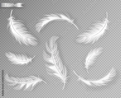 Fotografie, Obraz  White feathers set collection Vector realistic