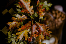 Closeup Of Red And Yellow Oak Leaves