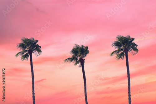 Foto op Aluminium Candy roze silhouette tropical palm tree with sun light on sunset sky. Copy space. Summer vacation and travel concept.