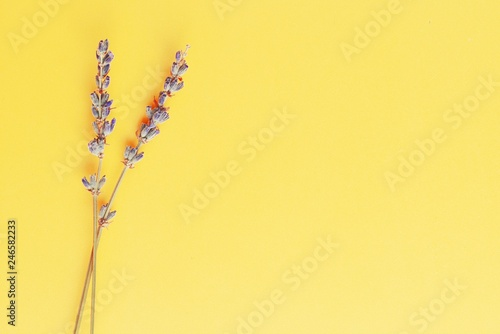 Wall Murals Floral violet lavender flowers arranged on bright yellow background. Top view, flat lay. Minimal concept. Dry flower floral composition. Pastel colors.