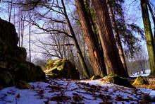 Wall, Trees And Snow - Tercino Udoli, Nove Hrady, South Bohemia