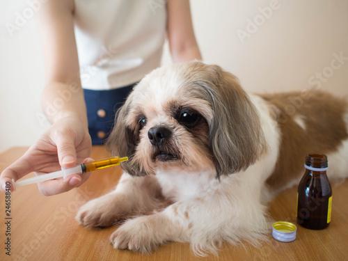 Photo Dog taking medicine